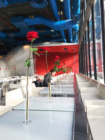 Flowers Design Architecture Blue Red Color Portrait colour of life Colors Roses🌹