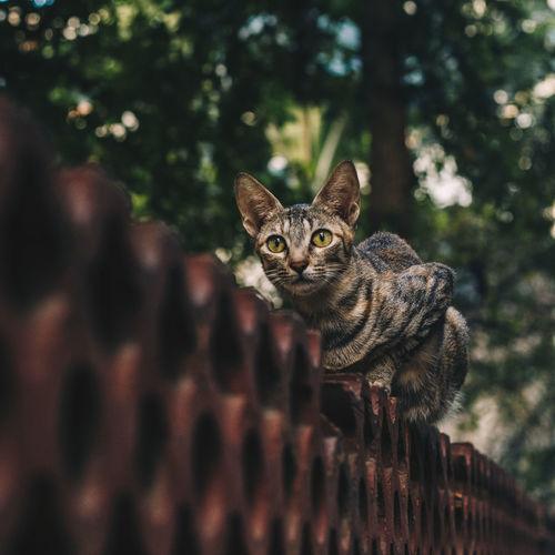 Portrait of tabby cat sittinsitting on wall