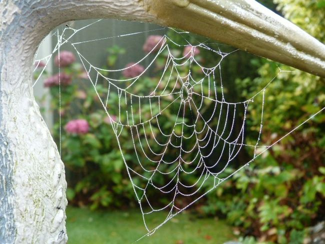 Watery Spider Web  Spiderwebs Spider Silk InTheGarden Heron Decoy Panasonic Lumix Morning Dew Getting Closer Getting To Know All About You