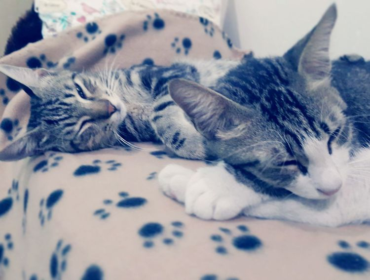 Cats Cats Of EyeEm Pets Domestic Cat Indoors  Domestic Animals Animal Themes One Animal No People