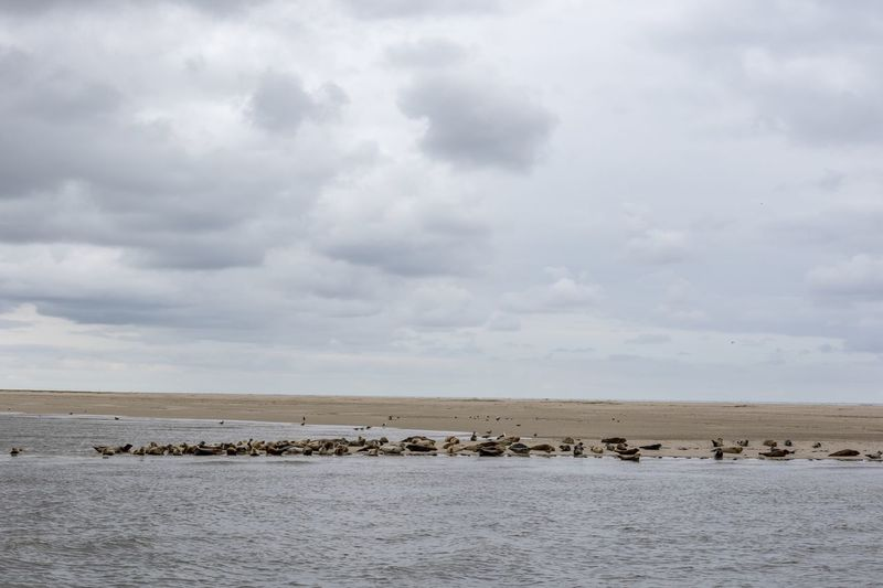Neuharlingersiel, North Germany Cloud - Sky Sky Large Group Of Animals Nature Animal Themes Beauty In Nature Animals In The Wild No People Sea Water Scenics Day Outdoors Togetherness Mammal Landscape Beach Horizon Over Water Bird Seal