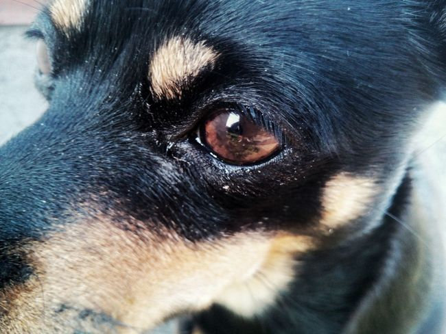 Pets One Animal Domestic Animals Animal Themes Dog Mammal Close-up No People Portrait Indoors  Day