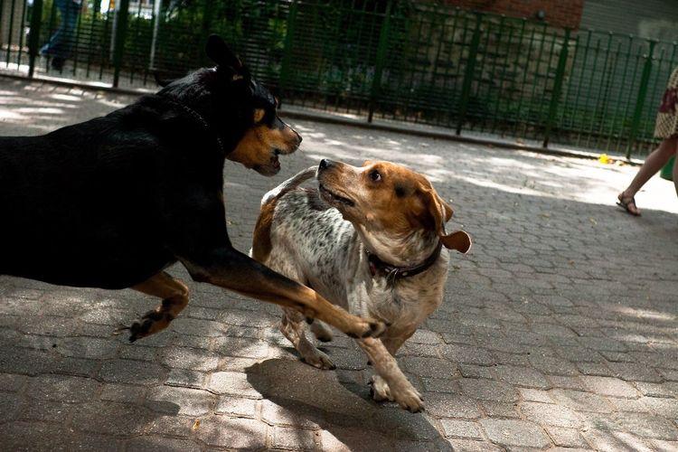 Dogs on ground