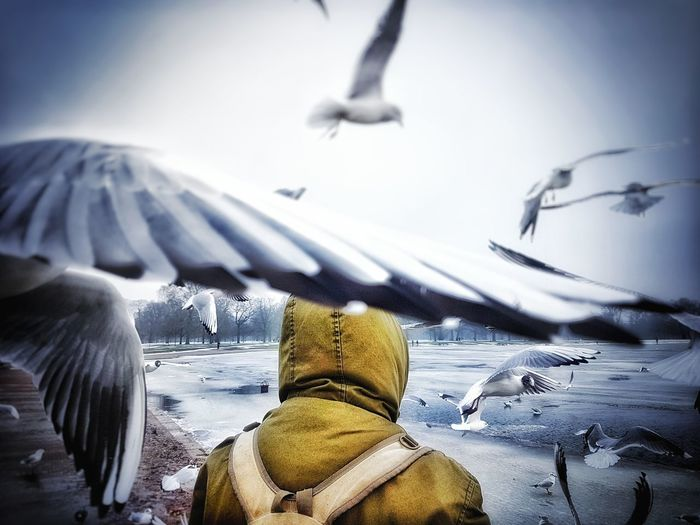 Rear view of man amidst birds during winter