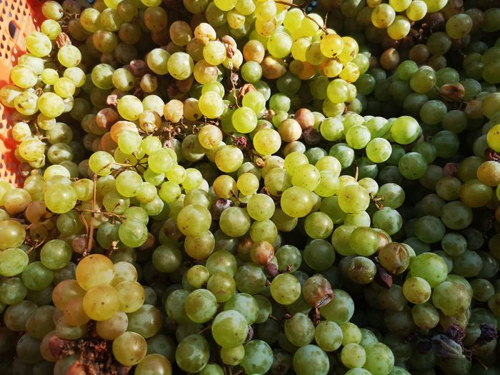 Fruit Full Frame Grape Backgrounds Close-up Green Color Food And Drink