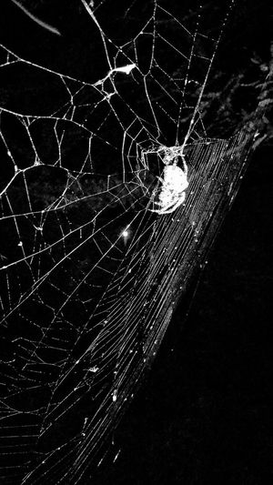 Spiderweb Web Spider On Web Night Photography Spider Hunting Spiders Silk Arachnid Insects  Spider Photography Nature Animals Insect Photography Round Shapes Natures Diversities Still Life Nature Photography Outdoors Beauty In Nature Animal Art Natures Architecture Showcase July Insects At Night Night Animal Overnight Success