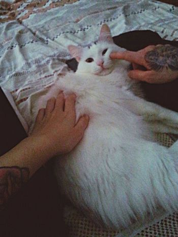 Mycat♥ Senya Love Tattoos Bed Bedtime