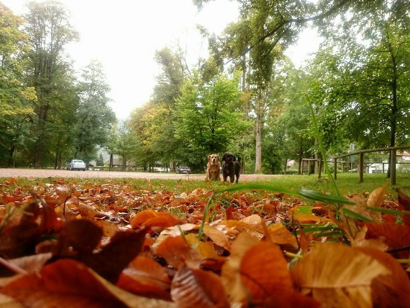 Nature Tranquil Scene Park Day Domestic Animals Surface Level Tranquility Autumn🍁🍁🍁