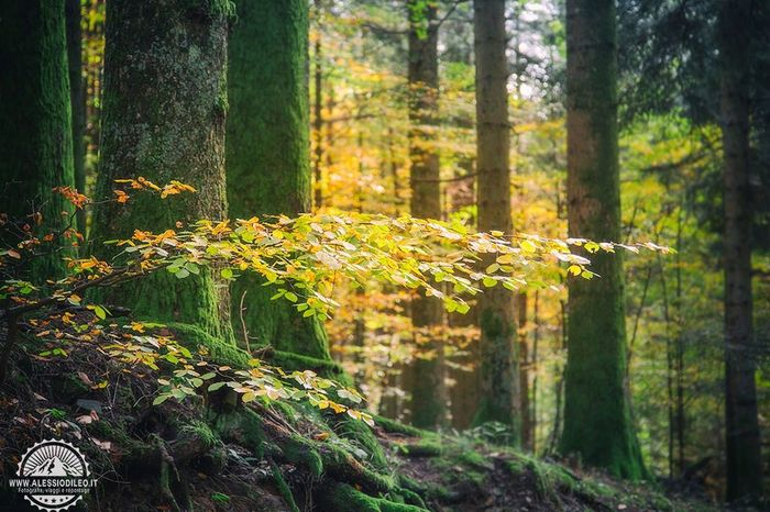 Outdoor life Nature Tree Forest Outdoors Green Color Travelling Travel Photography Travel Travel Destinations Parco Nazionale Appennino Tosco-emiliano Foresta Casentino Outdoor Outdoor Photography