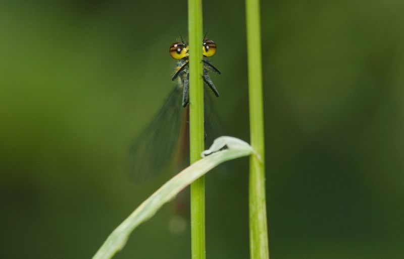 Close-up of damselfly perching on plant