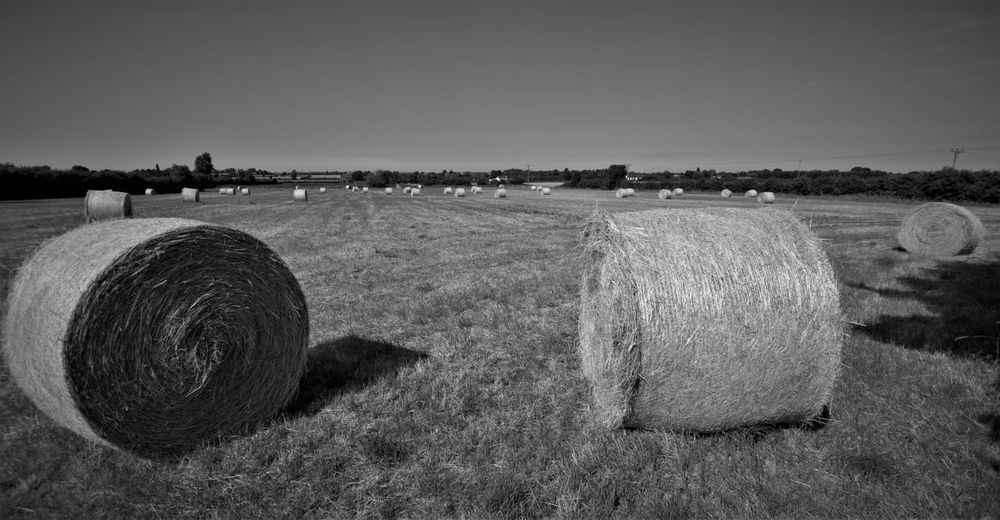 humber view Agriculture Bale  Clear Sky Day Environment Farm Field Grass Harvesting Hay Land Landscape Nature No People Outdoors Plant Rolled Up Rural Scene Scenics - Nature Sky Tranquil Scene Tranquility