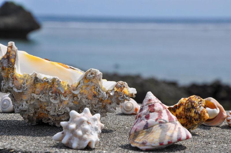 Close-up of seashells on beach against sky