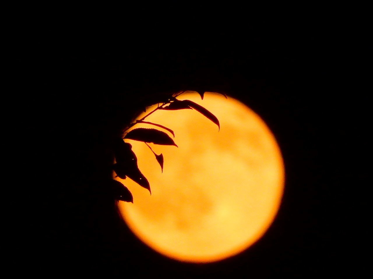 orange color, night, moon, no people, close-up, halloween, pumpkin, illuminated, nature, outdoors, beauty in nature, clear sky, black background, food, astronomy, freshness