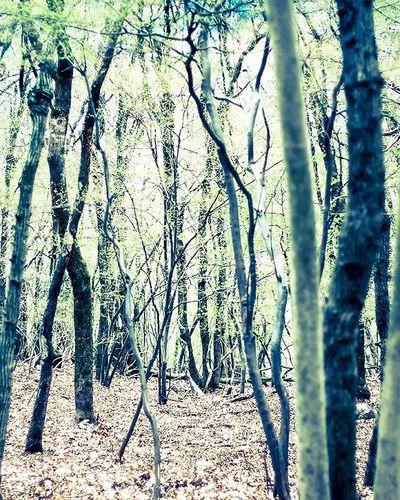 自然 散歩 妙見山 妙見の森 Woods Sony α700 Lightroom Nature