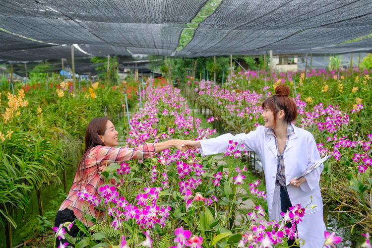 View of a flowering plants in greenhouse
