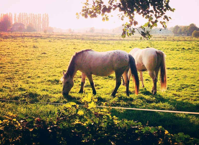 Naturelove Enjoying Life Horses Nature Photography Naturelovers Beautiful Nature Nature Horse FräuleinvonPreußenPhotography