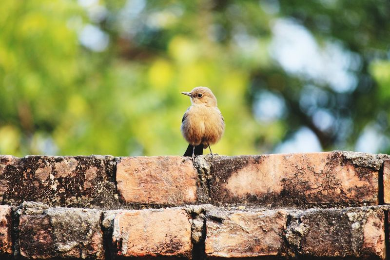 Just a candid! EyeEm Selects Eyeemmarket EyeEm Best Shots Bird Perching Mourning Dove Tree Sunlight Animal Themes Close-up Sky Sparrow Animal Nest Young Bird Bird Nest Robin Avian Nest