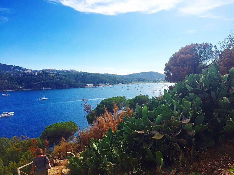 Nature Beauty In Nature Growth Plant Sea Day Scenics Sky Outdoors Water Tranquility Tranquil Scene Mountain No People Blue Tree Nautical Vessel Prickly Pear Cactus Kakteen Italy Porto Azzurro Isola D'Elba  Yacht