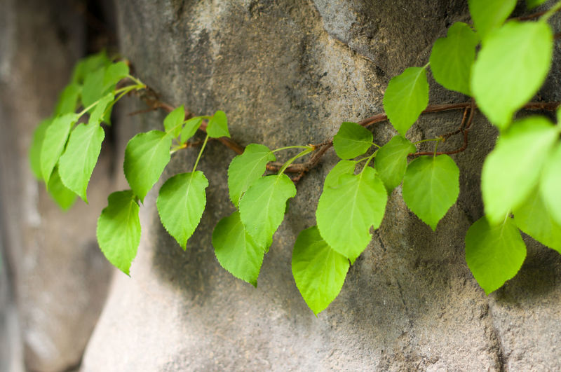 Close-up of plant hanging outdoors