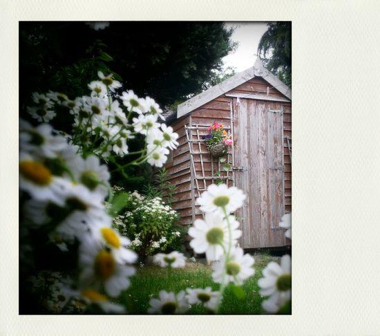 My Backyard Art, Drawing, Creativity Flowers Enjoying Life