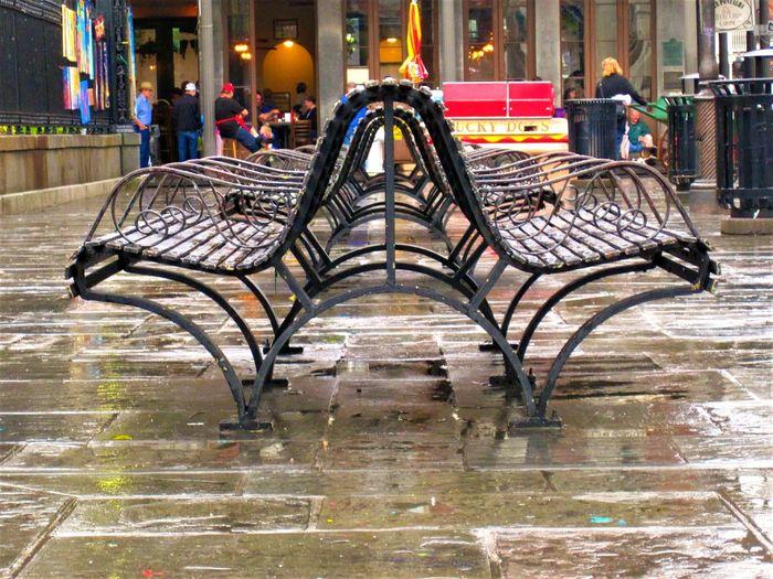 Wet zebra in city