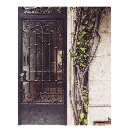Architecture Rosario Argentina Streetphotography Plant
