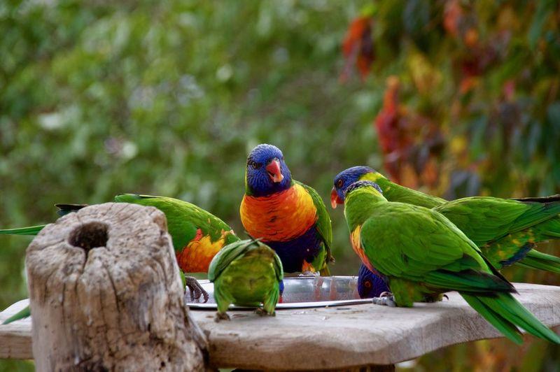 Meeting Parrot