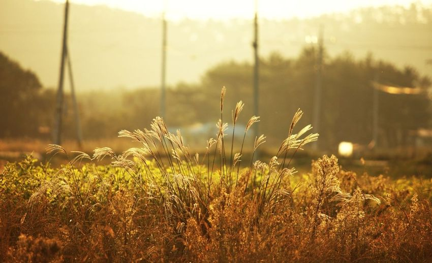 Plants growing on field at sunset