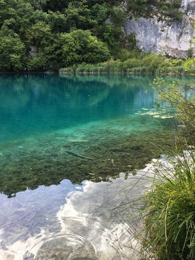 Beautiful Plitvice Lakes National Park Plitvice National Park Lake Lake View Croatia Water Reflection Reflections Reflection_collection Reflections In The Water Beauty In Nature Shootermag Ladyphotographerofthemonth Tree Nature Landscape Landscape_Collection Fine Art Photography Tranquil Scene Scenics Tranquility Water Reflections Growth Green Color Nature Breathing Space Investing In Quality Of Life The Week On EyeEm Been There. Connected By Travel The Great Outdoors - 2018 EyeEm Awards