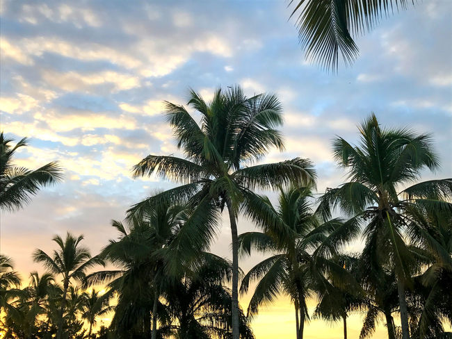 Beauty In Nature Cloud - Sky Colorful Day Growth Low Angle View Nature No People Outdoors Palm Frond Palm Tree Scenics Silhouette Sky Skyscape Sunset Sunshine Tranquil Scene Tranquility Tree Tree Trunk Tropical Climate Tropical Paradise
