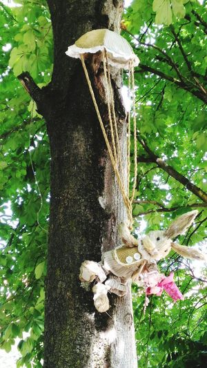 Close-up of mushrooms on tree trunk