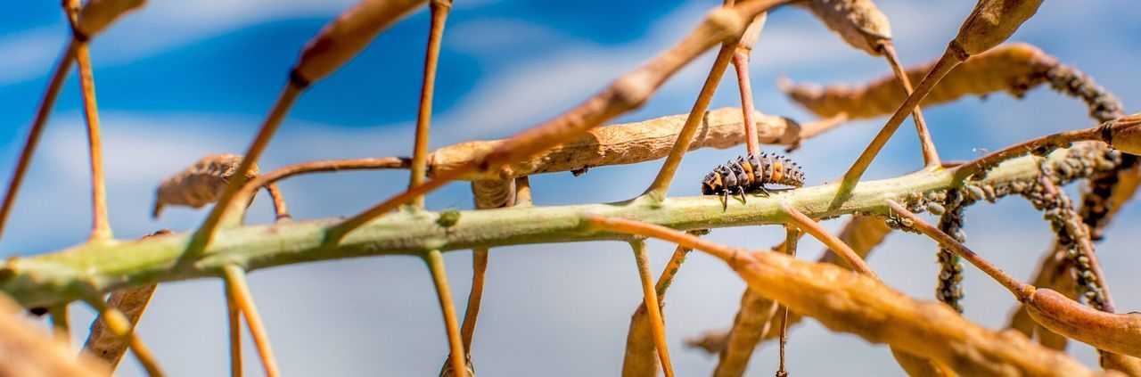 Low angle view of insect on dried plant