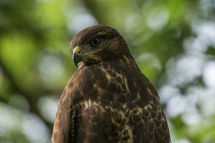 Buzzard in the wild Nature Animal Themes Animal Wildlife Animals In The Wild Bird Buzzard  Close-up Day Focus Focus On Foreground Nature No People One Animal Outdoors
