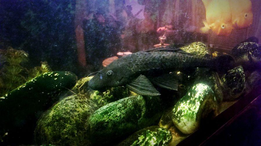 Batman Pose By Black Fish