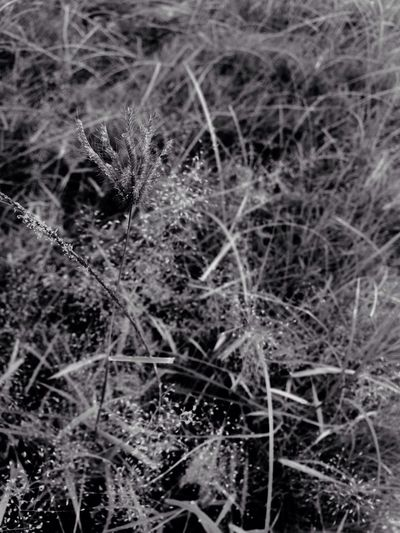 GRASS. EyeEm Best Shots Eyeem Philippines EyeEmCDO Faces Of EyeEm Blackandwhitephotography MJBRPhotography