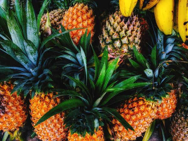 Pineapple🍍 Nature Plant Cannabis Plant Outdoors Freshness Close-up Beauty In Nature Flower Head Leaf Day No People