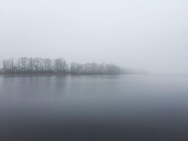 Fog Foggy Foggy Morning Lake Nature Trees Winter Lake View Beautiful Nature Beauty In Nature Beautiful Day