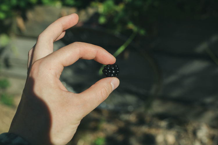 Cropped hand holding blackberry