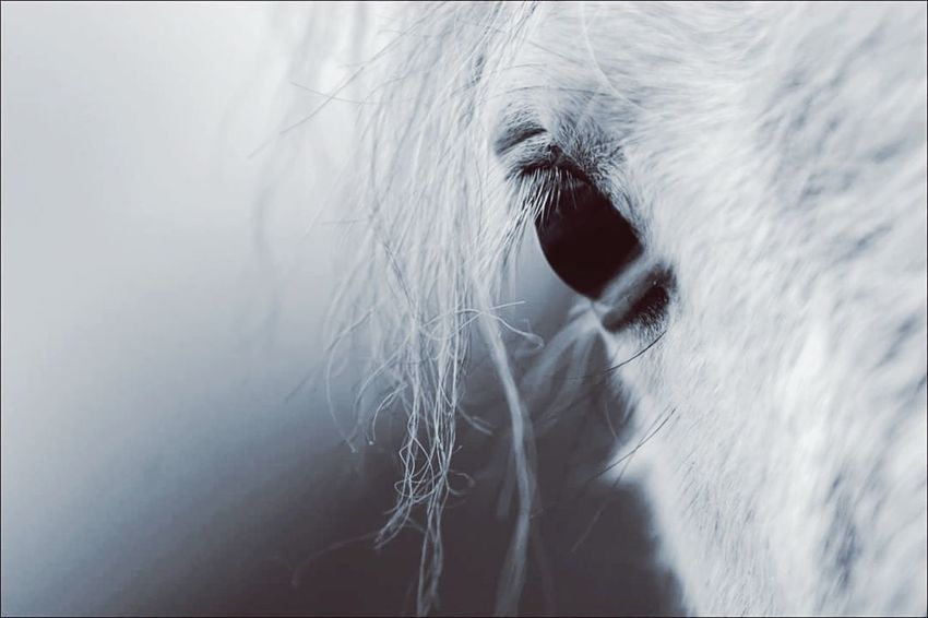 Horse Horse Photography  Horse Eye Equestrian Equestrian Sport Pony Animal Close-up