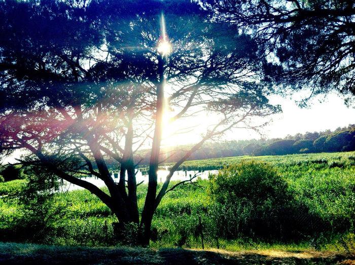 Tree of a kind