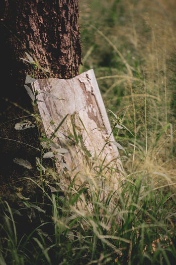 summer days Summer Aesthetic Nature Outdoors Calm Plant Light Greenery Green Foliage Moody Tree Bark Weeds Reeds Close Up Focus Shot Tree Close-up Grass Woods Countryside EyeEmNewHere
