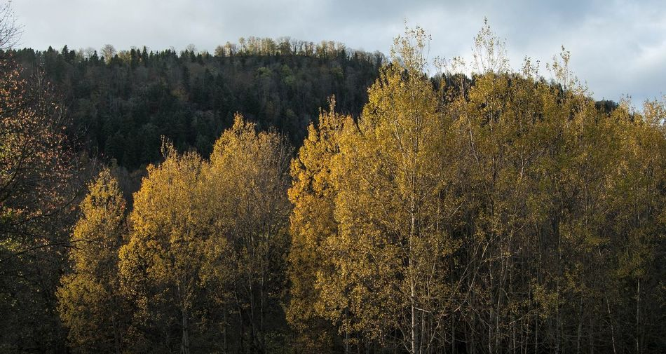Quelque part entre l'automne et l'hiver Tree No People Outdoors Landscape Nature Forest Doubs Hiver Green Color Winter Paysage Beauty In Nature Montagne Agriculture Campagne