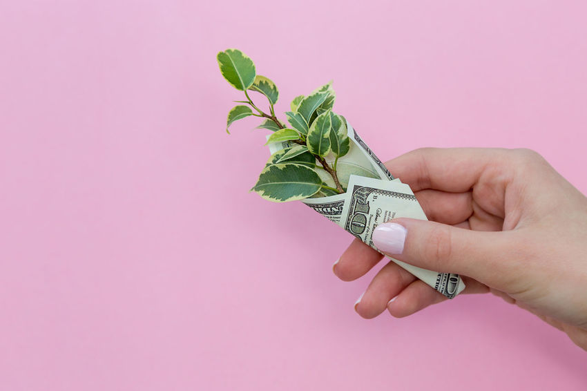 a green plant is wrapped in a hundred-dollar bill on a colored background Luck Sprout Business Life Plant Prosperity Revenue Rich Wages Wrap Abundance Background Colorful Copy Space Dollar Dollars Earnings Finance Financial Income Leaf Money Profit Success Wealth Wrapped Wrapping Us Currency Paper Currency Currency