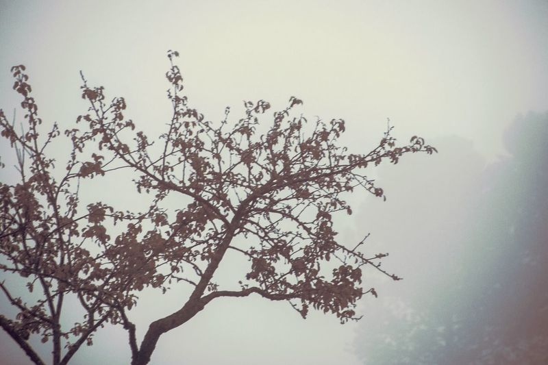 Tree Branch Nature Beauty In Nature Low Angle View Growth Flower No People Day Outdoors Clear Sky Sky Fragility Freshness Perching Bird Close-up EyeEmNewHere