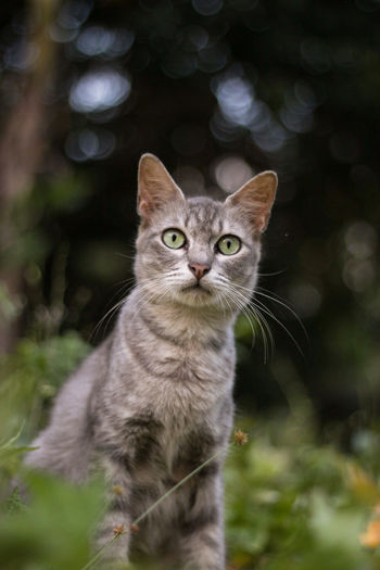 Staring cat EyeEmNewHere Nature Standing Whiskers Animal Animal Themes Bokeh Close-up Day Domestic Animals Domestic Cat Eyes Feline Furry Light Bokeh Lookingup Malaysia Mammal Nature One Animal Outdoors Pets Portrait Stare Whisker