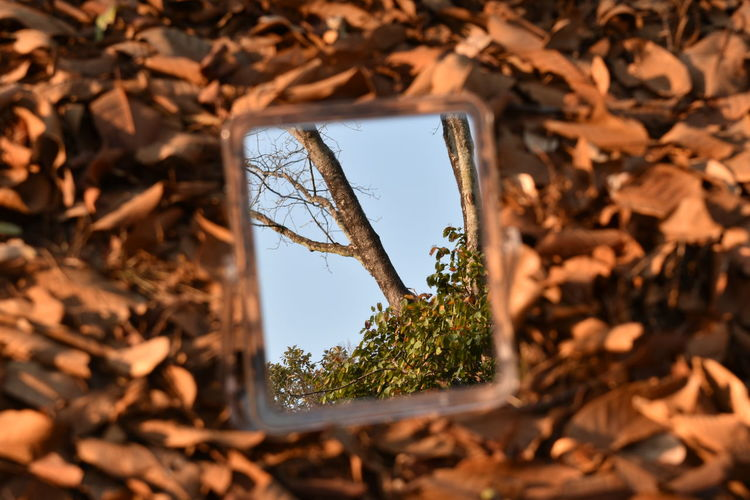 Branches Tree Background Fallen Leaf Background Leafless Leafless Branches Leafless Tree Leafless Tree In Mirror Reflection Over Fallen Dry Leaves As Background