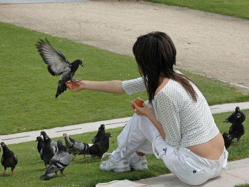 Les pigeons des tuileries Pigeon Pigeons Jeune Fille Paris Young Lady Lassie Jardin Des Tuileries Paris ❤ Paris, France  Fille Girl Young Girl Manger Apprivoiser Oiseaux