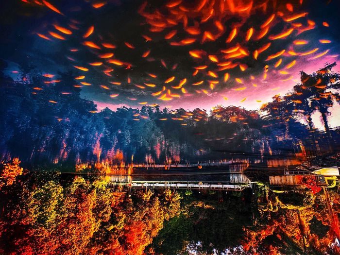 Parallel Universe Creative Light and Shadow Another Dimension Red Color Fish Realm Autumn colors Reflection Tree Illuminated Night No People Nature Beauty In Nature Multi Colored Water Orange Color Outdoors Scenics - Nature Plant