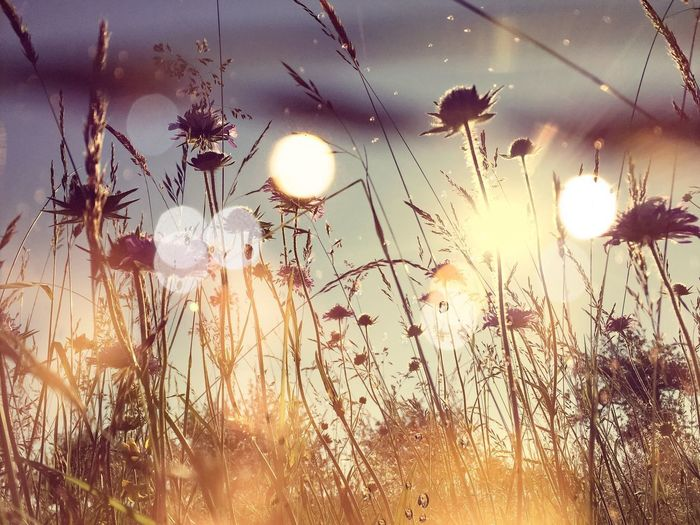 Meadow in the sun with bokeh Sunlight Romantic Idyllic Dreamy Flowers Flowers Artistic Season  Morning Light Meadow Meditation Health Beauty Spring Summer Bokeh Flower Growth Plant Nature Sun Sky Grass Day