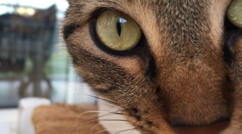Pet Portraits Domestic Cat Animal Themes One Animal Close-up Feline Whisker Yellow Eyes Portrait